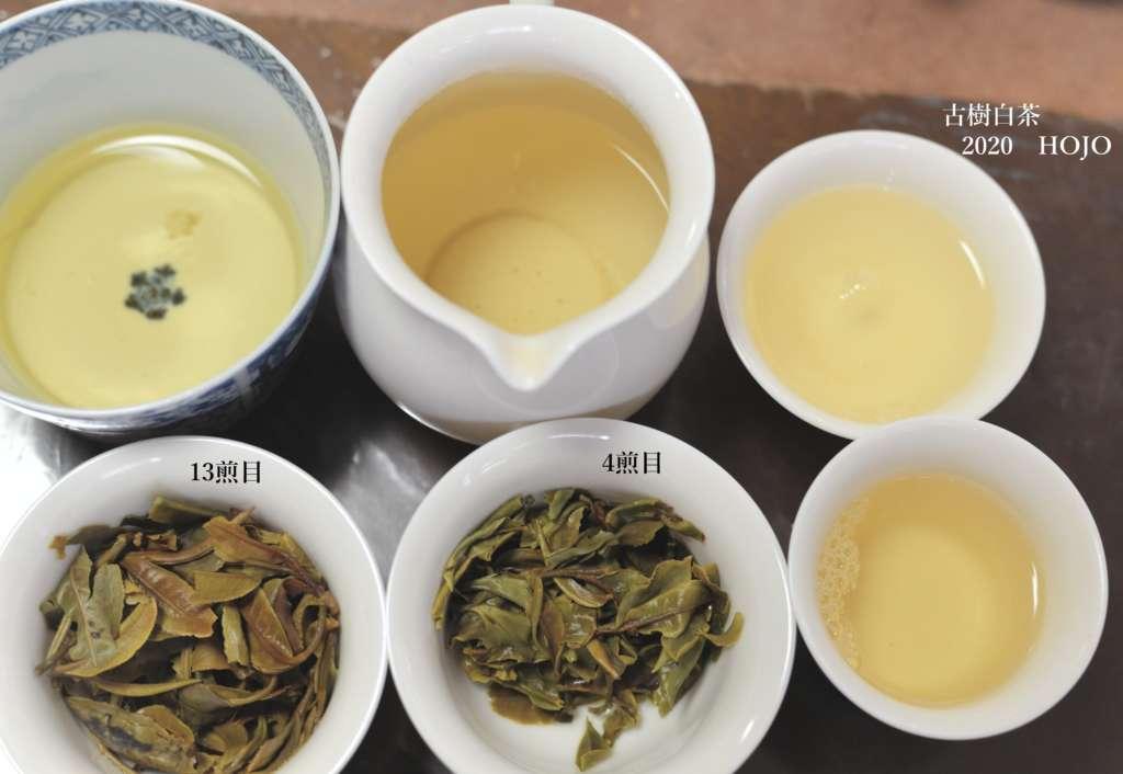 雲南古樹白茶を飲む
