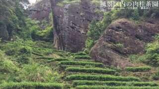 肉桂の茶園